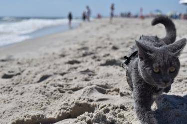 Zdjęcie główne #30 - Chcesz zabrać kota na plażę? Pamiętaj o tych 4 zasadach