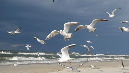 Zdjęcie główne #47 - Bieganie po plaży – rewelacyjny sposób na piękną sylwetkę
