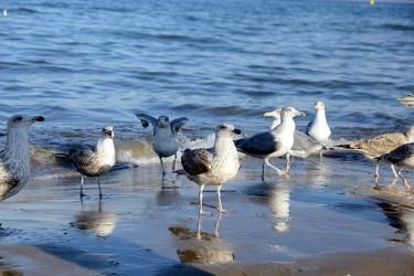 Zdjęcie główne #70 - Zamieszkać przy plaży – marzenie, ale trudne do spełnienia. O czym trzeba pamiętać?